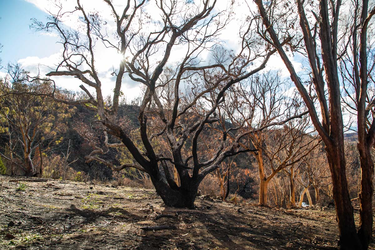 VW continues to support post-bushfire recovery